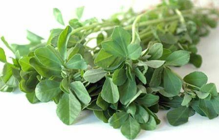 تاثیر گیاه شنبلیله در جلوگیری از ریزش مو