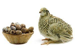 خواص تخم بلدرچین برای کودکان