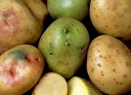 آیا بخش های سبز شده سیب زمینی قابل خوردن هستند ؟