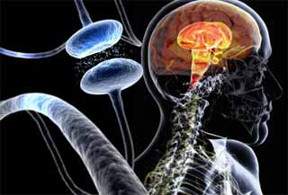نقص سلولی عامل ابتلا به پارکینسون