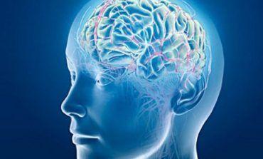 کشف عروق خونی ناشناخته در مغز انسان