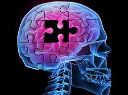 پروتز مغزی، راه گشای بیماری های مرتبط با حافظه