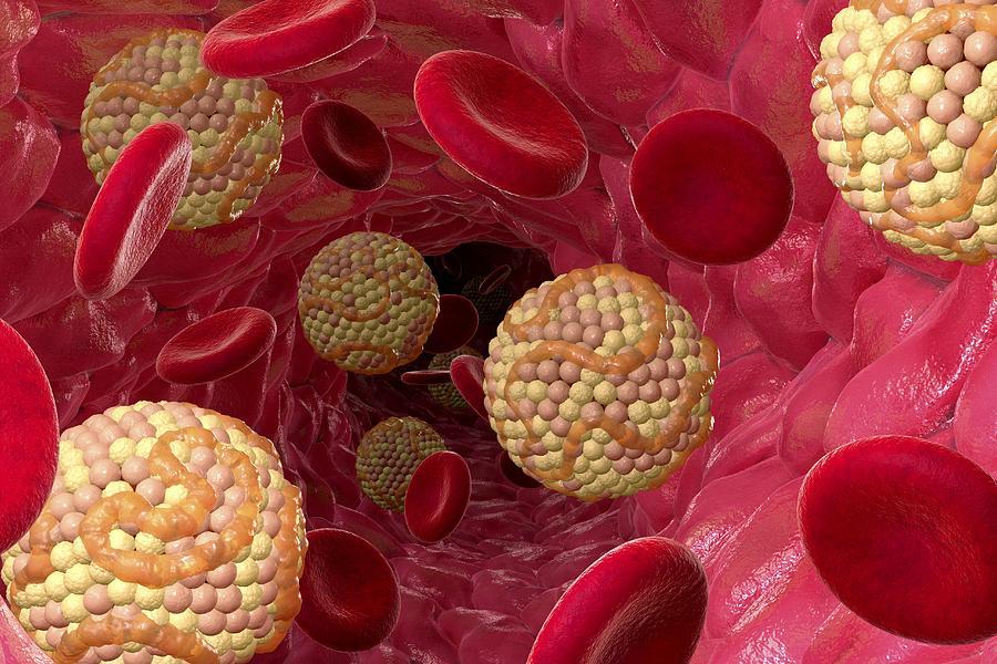 کاهش چربی بدن با خاموش کردن یک پروتئین