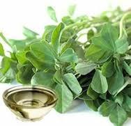 شنبلیله گیاهی دارویی با خواصی معجزه آسا