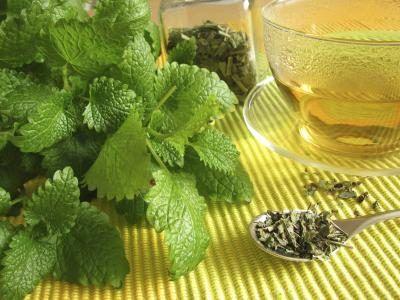 درمان آلزایمر با گیاه بادرنجبویه