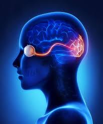 تشخیص بیماری های مغز از طریق شبکیه چشم