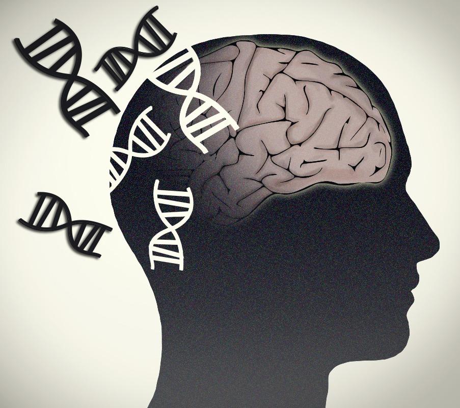 مغز مانند پوست پیر می شود