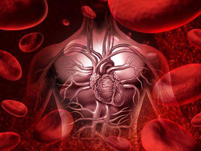 سیر و گوجه فرنگی، خوراکی هایی موثر در برابر سرطان پروستات