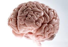 نمونه برداری از مغز بدون خونریزی