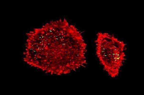 مولکول های طراحی شده برای درمان آسیب ناشی از حمله قلبی