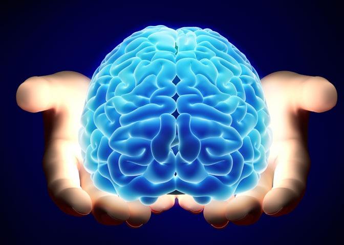 مغز قند موردنیاز خود را تولید میکند