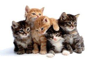 رابطه انگل گربه با بروز سرطان و بیماریهای عصبی