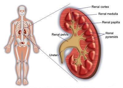 درمان شکم درد با گیاهان دارویی