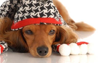 نگهداری حیوانات خانگی و زمستان