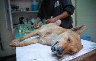 عوارض و فواید عقیم سازی حیوانات خانگی