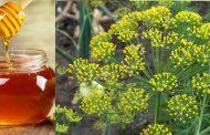 آشنایی با خواص عسل شوید