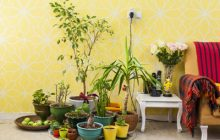 نکته هایی برای نگه داری گیاهان در فصل پاییز و زمستان