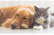 توصیه های وزارت بهداشت به کسانی حیوانات خانگی دارند