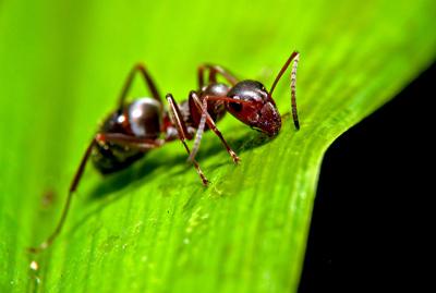 روش های از بین بردن مورچه در خاک گلدان