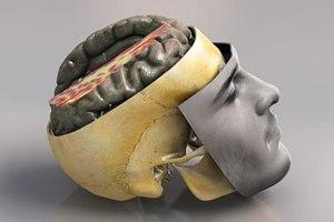 انواع مزاج مغز از نگاه طب سنتی