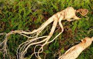 گیاهان تقویت کننده مغز را بشناسید