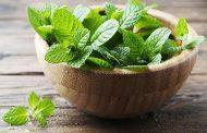 نعناع، گیاهی با خواص فراوان